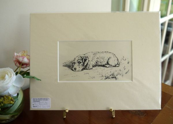 Wire Haired Dachs - Dax D9 - lying down  1940's print by Lucy Dawson